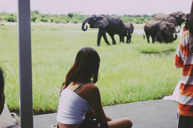 Watching the elephants play