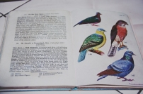 A book written by my grandfather's friend - the birds of India.